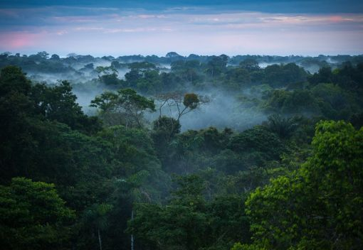 The Amazon's Forests are in Big Trouble