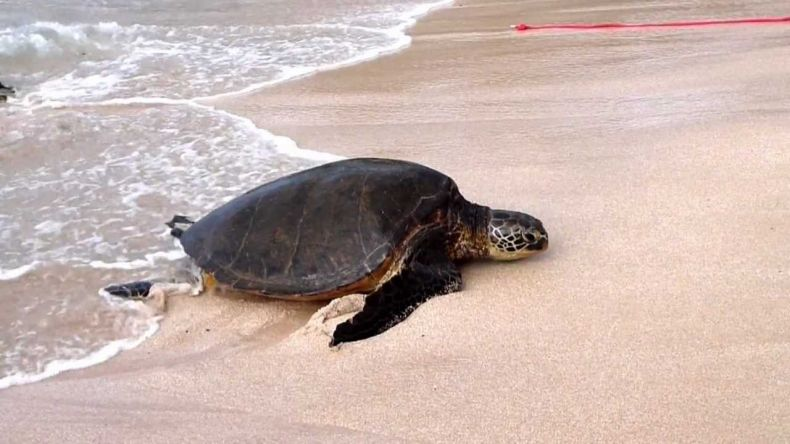 Turtle Landing sites are under Threat