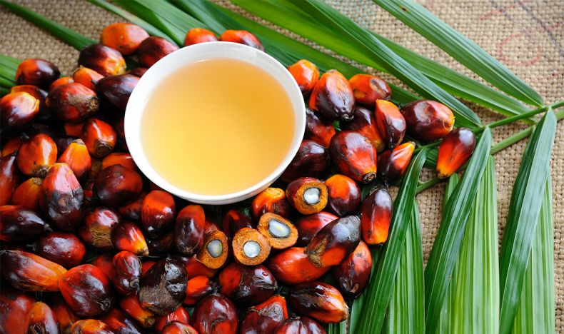 Should the EU stay firm in its Stance on Malaysian Palm Oil?