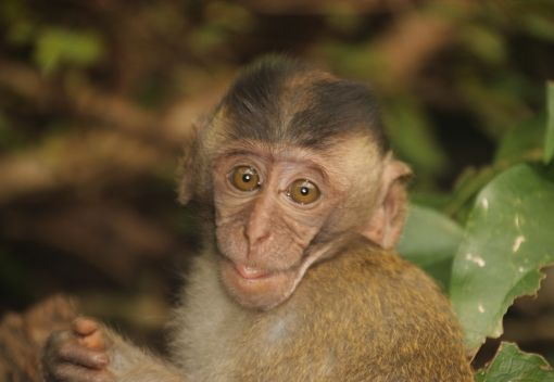Macaques too like … wait for it … Raunchy Ads