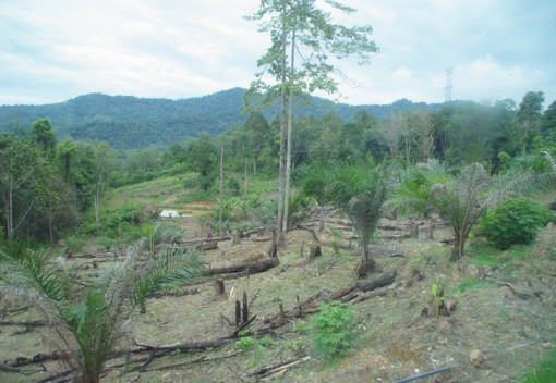 Deforestation in Malaysia Accelerating Faster than Anywhere in the World