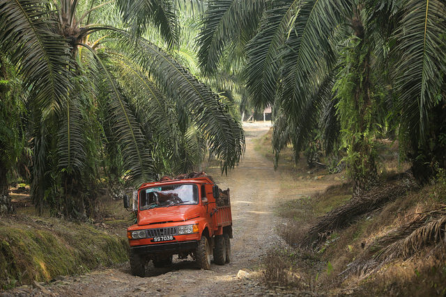 Rejection by Norwegian Investment Firm calls Malaysian Palm Oil into Question