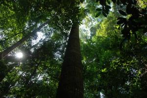 Jungle, Taman Negara. by Marco Abus @flickr
