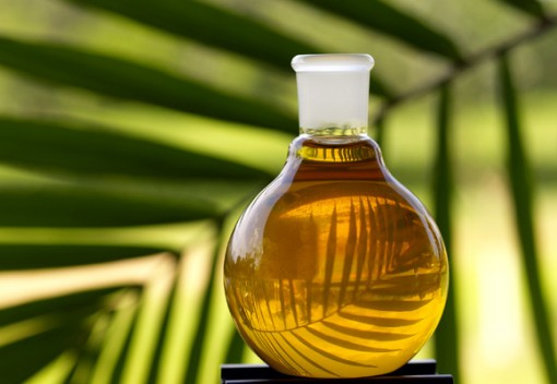 Palm Oil has Created Massive Potential for Biomass Energy in Malaysia