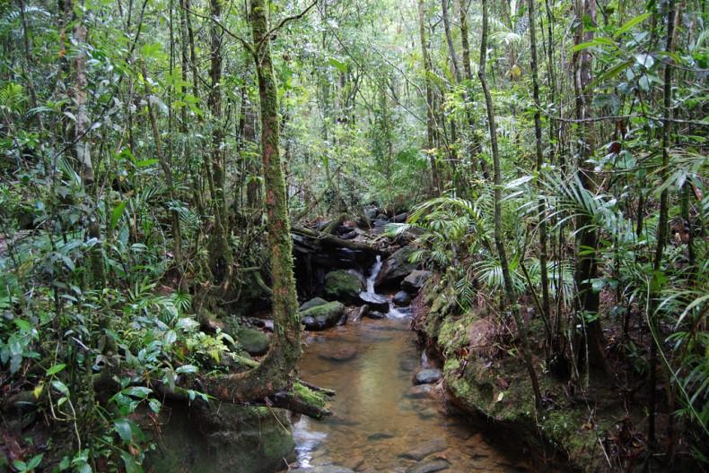 The Heart of Borneo