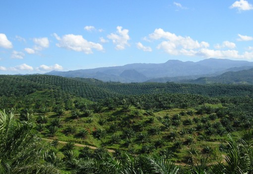 World's Largest Ecological Study on Palm Oil Deforestation Releases Five Year Review