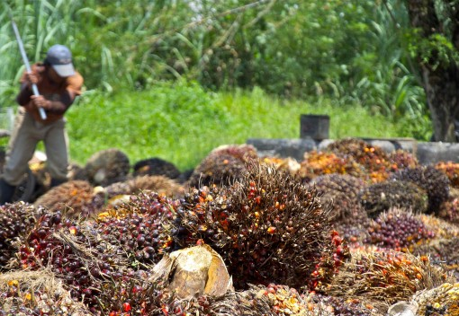 Why More Sustainable Palm Oil could mean More Human Rights Violations