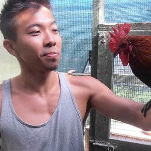 Cedric Tan with the Roosters he uses for Zoological research at Oxford University.