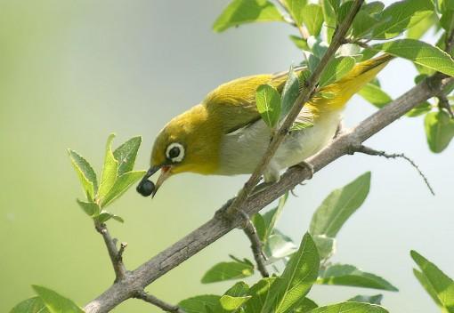Bird Netting in Malaysia