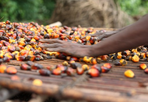 5 European Nations Promise 100% Sustainable Palm Oil