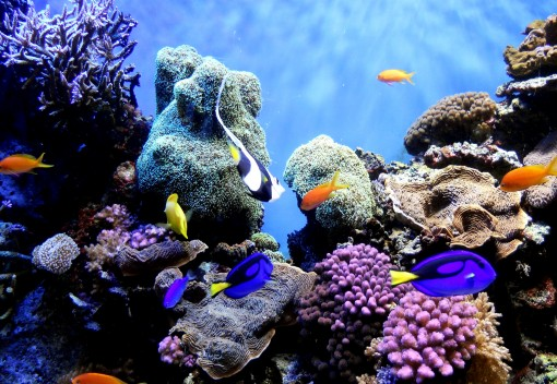 El Nino may Decimate Malaysia's Corals, Experts Fear