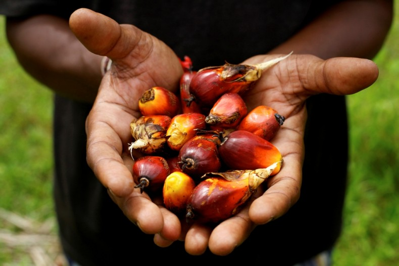 Malaysian Palm Oil Company Leads by Example in Suspending Forest Clearing