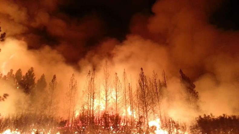 Fire Tears through a Sarawak Forest. Time to Worry