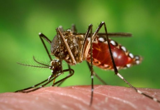 Spread of Dengue could be Stemmed