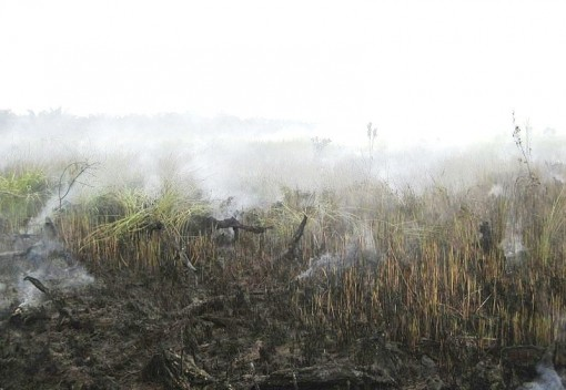 Villagers in Raja Musa Help Fire-Ravaged Peatland Spring back to Life