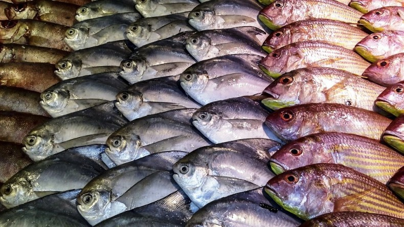 Pollution Persists in Seafood, but Less So Than You Might Think