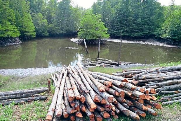 Roadside Piles of Timber Highlight Threat of Illegal Logging in Sarawak