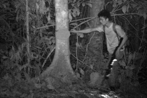 A poacher is captured on a camera trap in the Sipitang Forest Reserve with an automatic rifle. Photo Credit: Danau Girang Field Centre