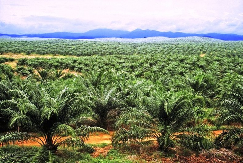 Agronomist Touts the Virtues of Palm Plantations. Should we be Impressed?