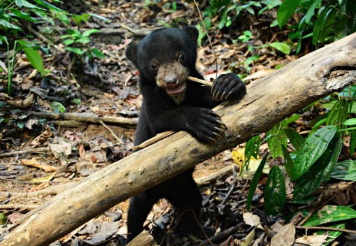 Orphaned Bear Cub finds a new Home