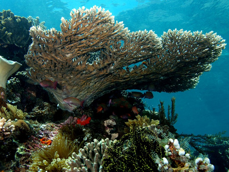 Malaysia's Coral Reefs are 'Doomed'