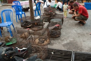 Foreign tourists inspect the animals on sale at a wildlife market. Photo Credit: Wikimedia Commons
