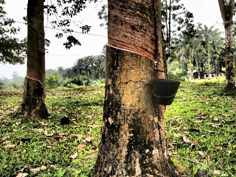 Lower TTPA Tariffs on Malaysian Rubber may End up Harming Forests Further