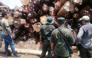 Forestry officials inspect newly seized illegally logged timber. Photo Credit: MACC