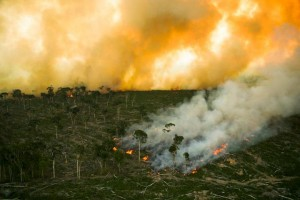 A fire burns in a Borneo forest. Photo Credit: Animal Works