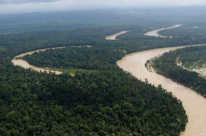 The Kinabatangan's floodplains are vital for local biodiversity. Photo Credit: WWF-Malaysia