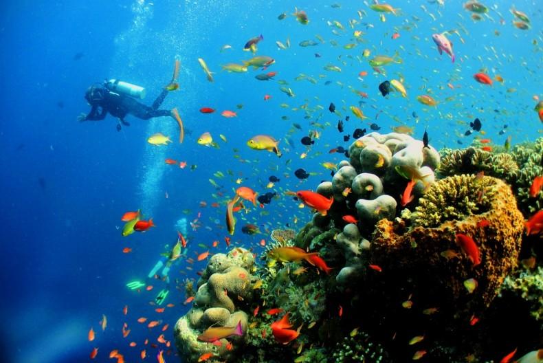Aquatic Cops Begin Patrolling Reefs