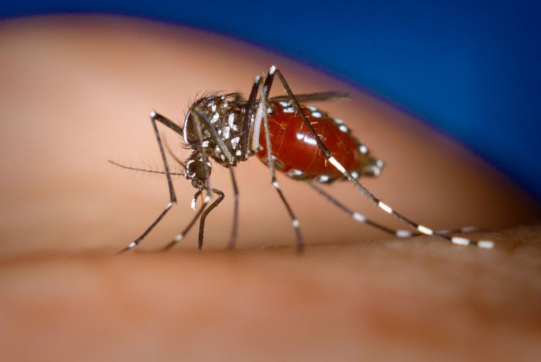 Zika Continues to Remain a Threat