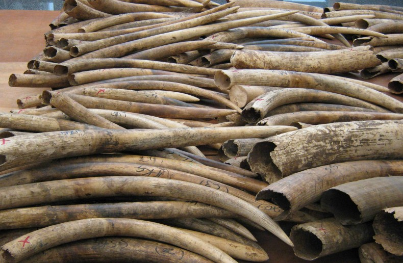 Malaysia sends a message to Ivory Smugglers: Don't Come Here