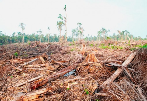 Malaysian Palm Oil Giant Loses Green Badge … and some of its Business