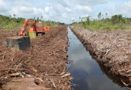 Green Group Dismisses Palm Oil Company's Claims