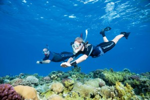 Snorkeling skills can be developed to a high level and allow for environment-friendly appreciation of sharks and reefs.  Photo Credit: SSI