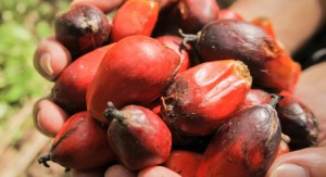 The cultivation of palm oil fruit routinely comes at a high price to natural environments. Photo Credit: WWF