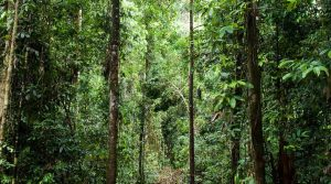 All wildlife conservation efforts must start by saving forests. Photo Credit: WWF