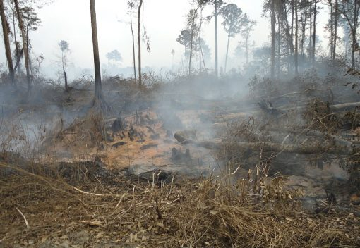 The Fiery Peats of Haze in Southeast Asia