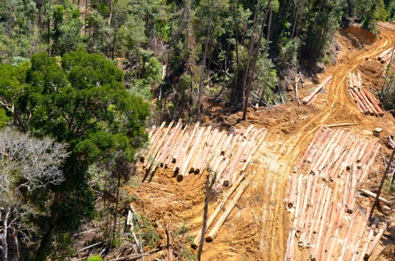 'Please Protect Our Forests!' Indigenous Penans Plead
