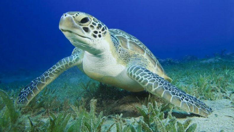 Sea Turtles, it turns out, are a pretty Mischievous Bunch