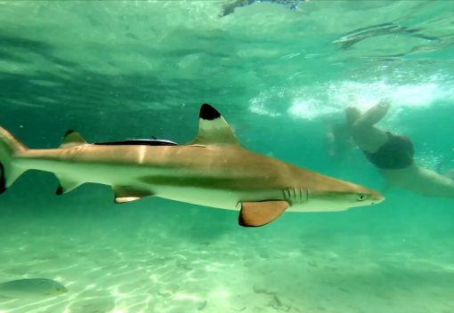 New Marine Zone will provide a Safe Haven for Sharks