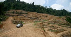 ns_malara_sarawakdeforestation_feat_free