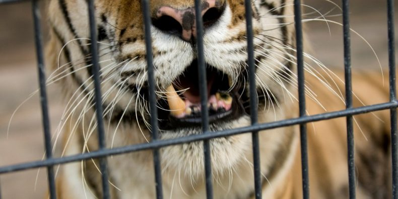 Malaysian Zoos are Houses of Horrors, Activist Charges