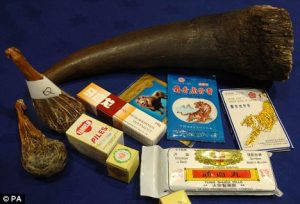 Rhino horn is used for a wide variety of ailments in Chinese traditional medicine. Photo Credit: EP