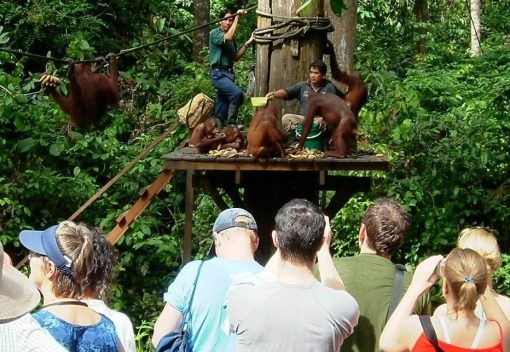 Conservationist calls for a Boycott of the Orangutan Rehabilitation Centre