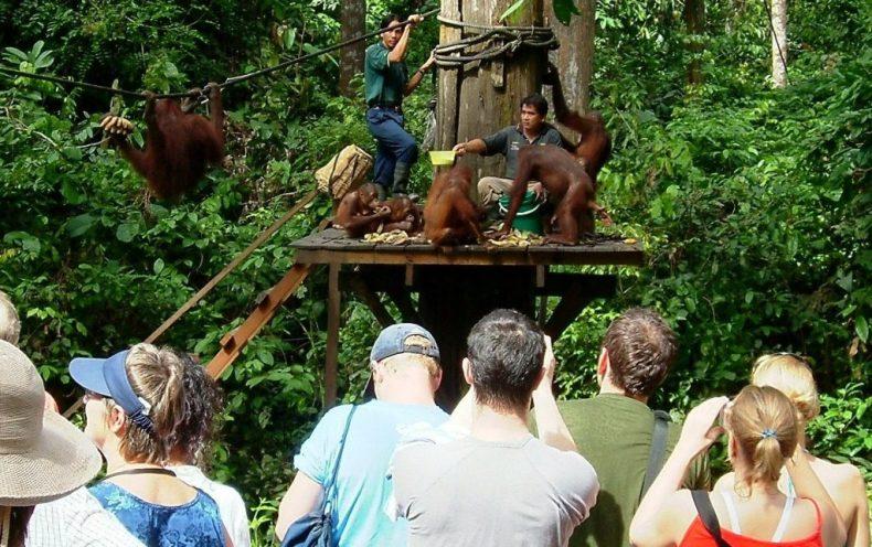 Conservationist calls for a Boycott of the Orangutan Rehabilitation Centre