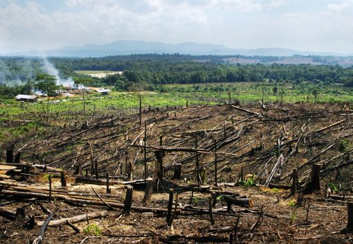 Penalized Palm Oil Giant feels like 'a Naughty Child' and Acts like One