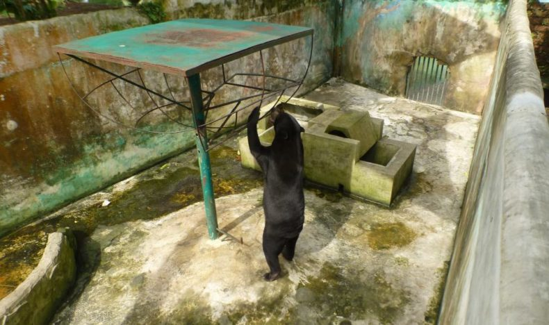 Save the Sun Bears from the Miri Crocodile Farm