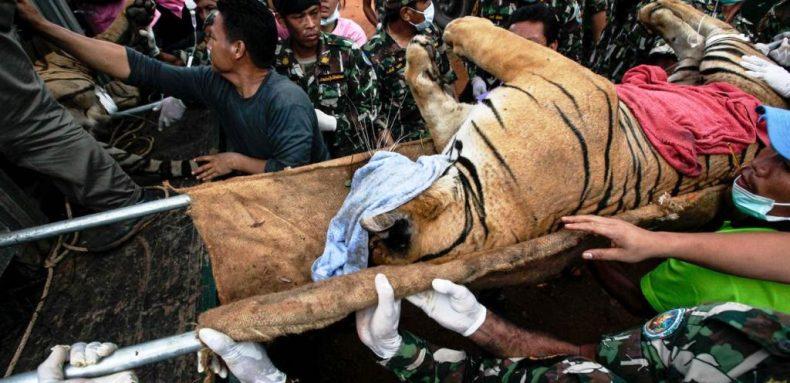 'Tiger Temple' had Shocking Secrets